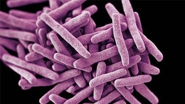 Fungos multirresistentes são uma das causas das infecções hospitalares