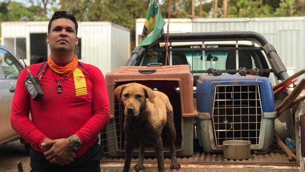Morre cadela que participou das buscas em Brumadinho
