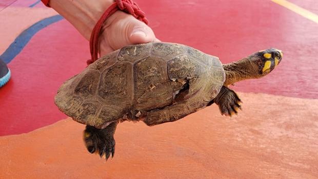 Equipes do Corpo de Bombeiros resgatam tartaruga ferida no Araguaia