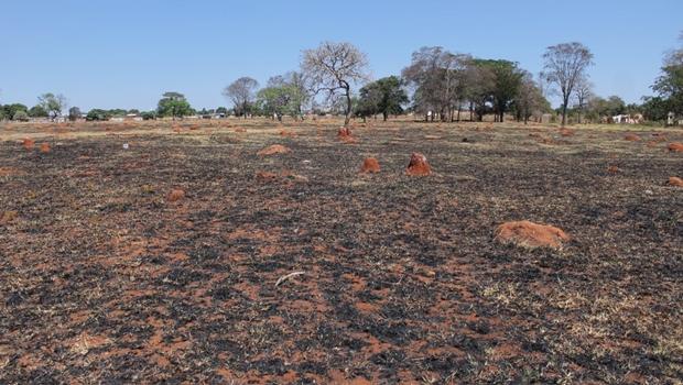 Desmatamento na Amazônia pode diminuir as chuvas em Goiás