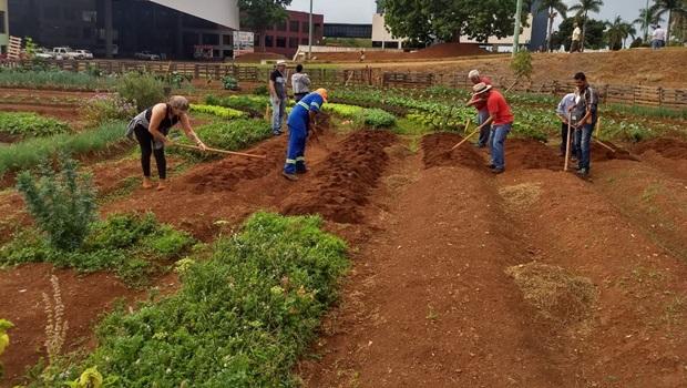 Parceria entre Senar e Prefeitura de Goiânia estimula uso de lotes vazios para cultivo de hortas