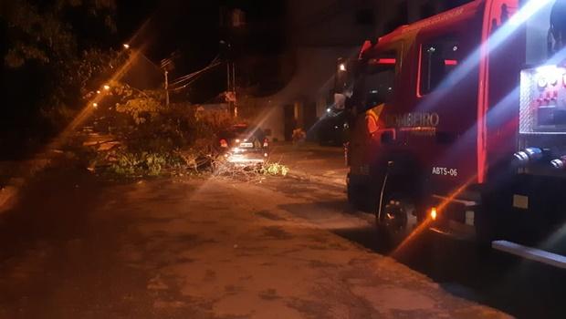 Bombeiros desobstruem rua interditada por queda de árvore no Setor Oeste