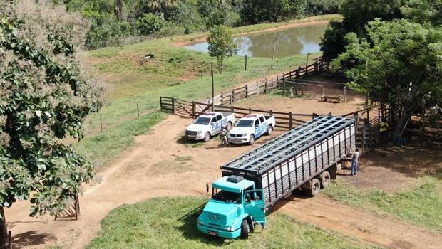 Polícia Militar recupera 58 cabeças de gado roubadas em Piracanjuba