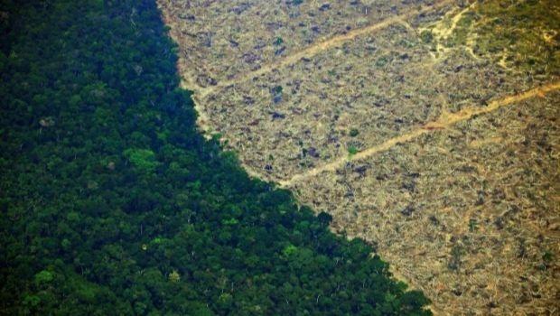 Em um ano, desmatamento na Amazônia foi equivalente a quase o dobro da área do Distrito Federal