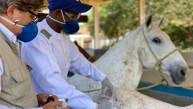Cientistas brasileiros criam soro com anticorpos de cavalo capaz de neutralizar coronavírus