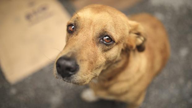 Animais são envenenados e esfaqueados em abrigo de Goiânia