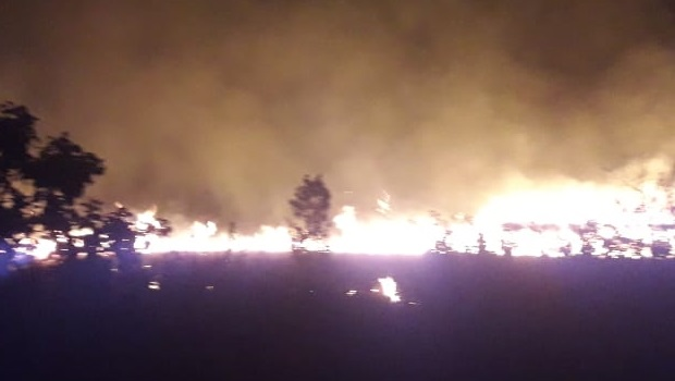 Bombeiros controlam incêndio florestal no Parque dos Pirineus