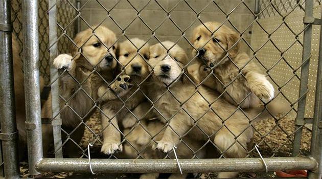 Advogado aponta erros em autógrafo de lei que proíbe venda de cães e gatos filhotes em Goiânia