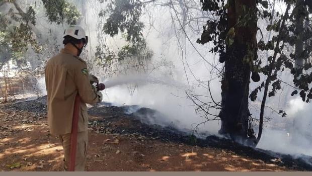 Incêndio no Jardim Botânico atingiu 30% de área florestal, calcula Corpo de Bombeiros