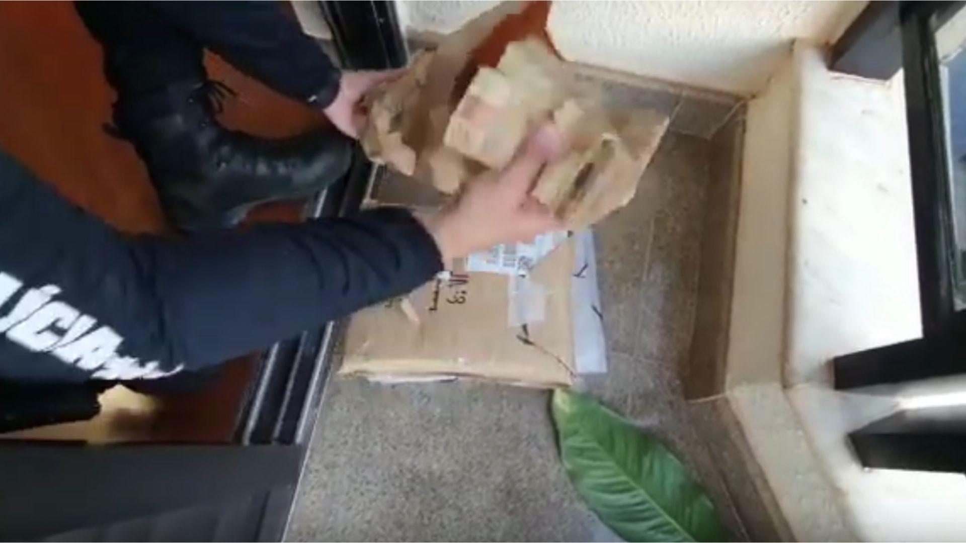 Deccor apreende R$ 135 mil escondido em uma planta. Veja vídeo
