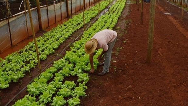 Pequenos produtores rurais terão acesso a mais de R$ 5 bi; recurso foi disponibilizado pelo BNDES