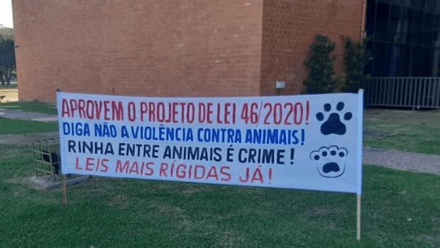 Deputados aprovam lei que proíbe rinha de cães e galos
