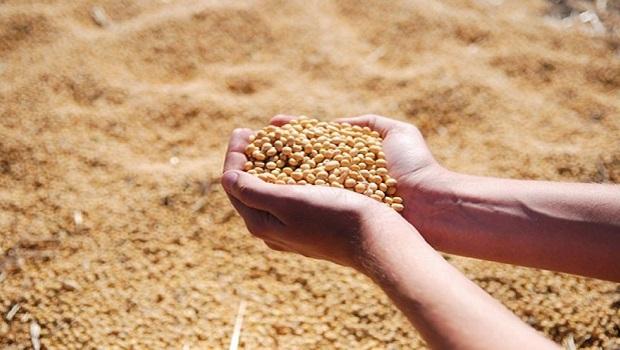 Agropecuária deve atingir R$ 93,6 bilhões do Valor Bruto da Produção