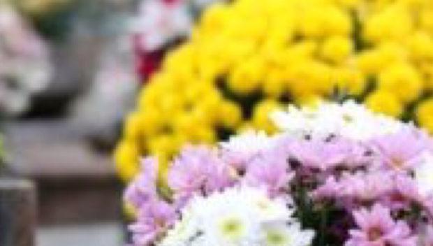 Procon Goiás: Variação de preços das flores para o Dia de Finados chega a 500%