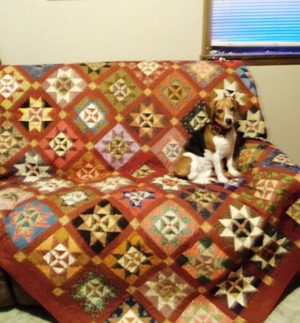 Puppy and quilt