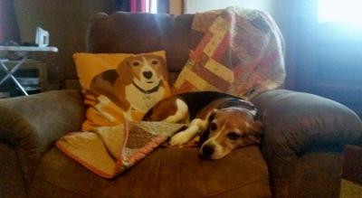Puppy Pillow (400x219)