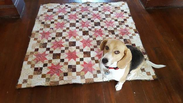 A Free Printable Quilt Pattern Pinkie Swear Jo S Country Junction