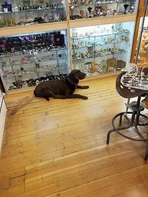 Shop 4-Dog (300x400)
