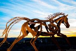Backside-Horse-1357