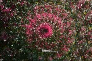 Kaleidiscope of flowers