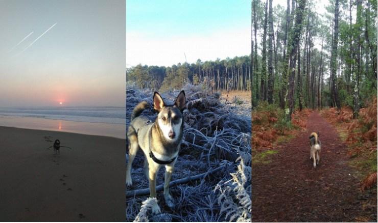 Se promener, rêvasser, en forêt, sur la plage, avec son chien, un husky sibérien.