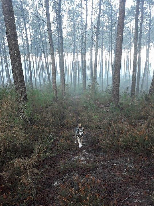 Les 4 saisons : La magie de la forêt en automne et en hiver.