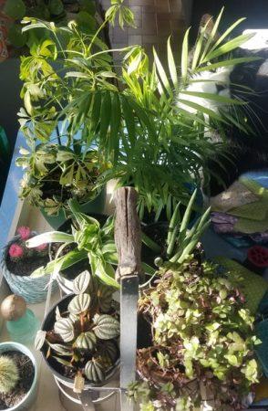 jardinage rempotage de confinement