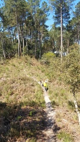 Promenade autorisée pendant le confinement dans la forêt des landes.
