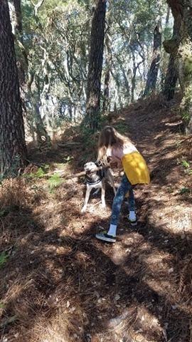 Promenade autorisée pendant le confinement dans la forêt des landes pour défouler le chien et l'enfant.