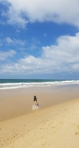 Après l'interdiction de plage pendant 2 mois, saveur de la retrouver