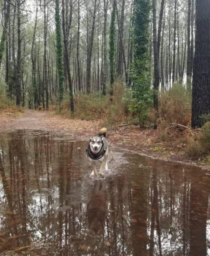 Petite philosophie de la marche humide élaborée selon les principes de vie du chien