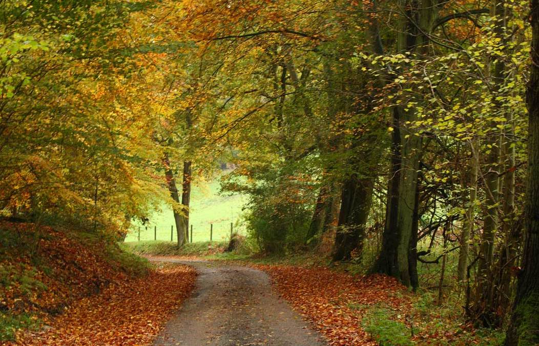 France-Lorraine autumn lane.