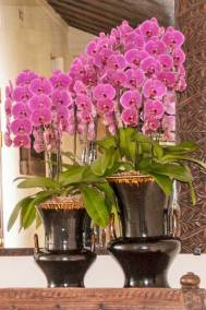 Orchids abound throughout Tamarind Village.