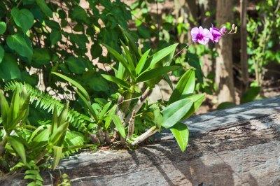 Santhiya landscaping detail - 1.