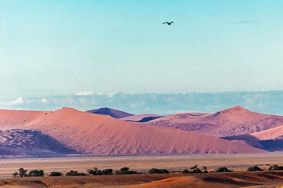 In the Great Dune Field, the sand changes colors with the light.