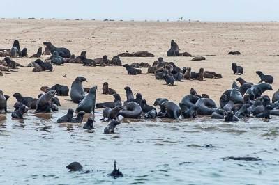 Walvis Bay Cape fur seals colony.