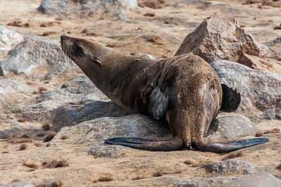 Cape Cross Seal Reserve.