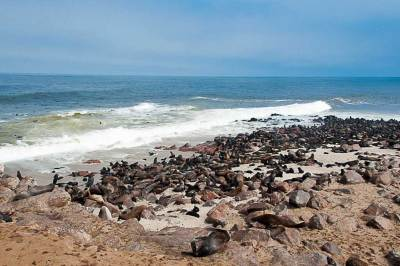 Cape Cross  is home to one of the largest colony of Cape fur seals in southern Africa.