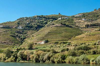 Terrace vineyards corrugate the hills.
