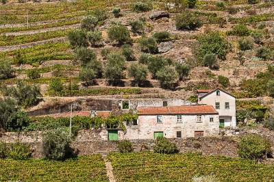Quintas of the Douro Valley.