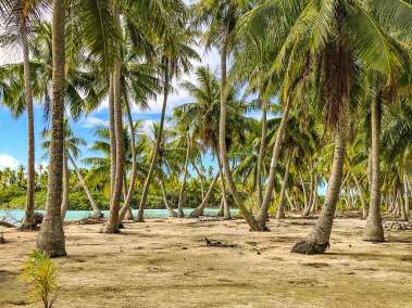 Fakarava coconut grove.