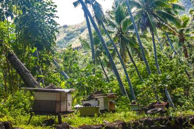 Honey from the village hives is a prized commodity in Hapatoni.