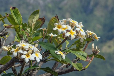 The gentle scent of tiare, the national bloom of French Polynesia, permeate the air of Tahuata.