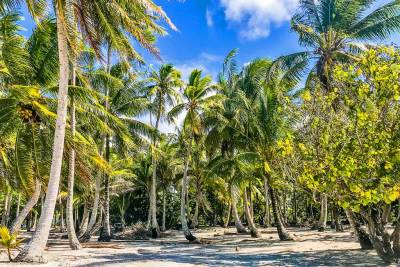 Motu Mahana on the Taha'a lagoon is shaded with groves of soaring coconut palms.