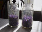 Violets in mason jars