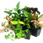 Video Josh S Frogs Terrarium Supplies For Container And Fairy Gardens Josh S Frogs How To Guides
