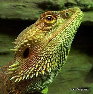 Choosing The Proper Lighting For Your Pet Reptile Or