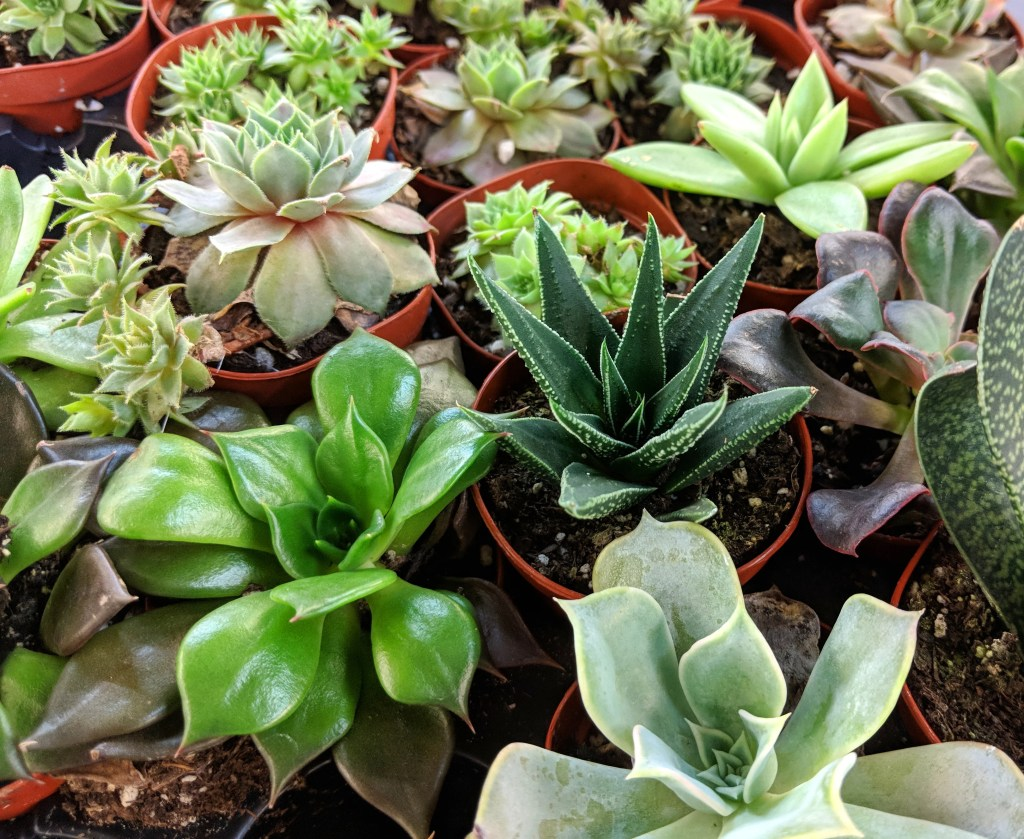 the five minute guide to keeping your succulents alive josh 39 s frogs how to guides. Black Bedroom Furniture Sets. Home Design Ideas