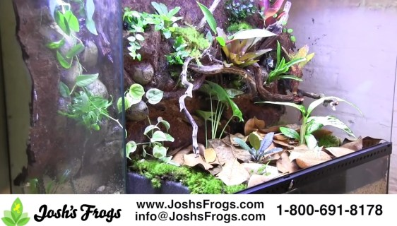 Substrates Archives Josh S Frogs How To Guides
