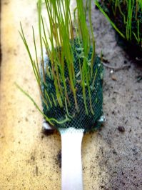 Early prototype of the grassy spoon